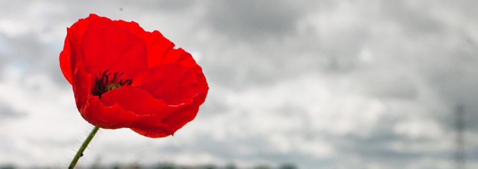Image result for Armistice centenary